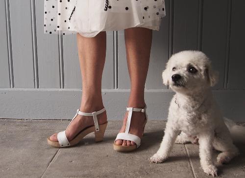dogsandshoes19.jpg