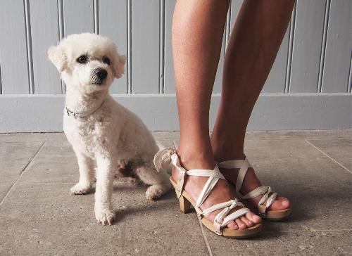 dogsandshoes21.jpg