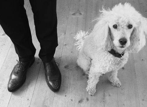 dogsandshoes20.jpg